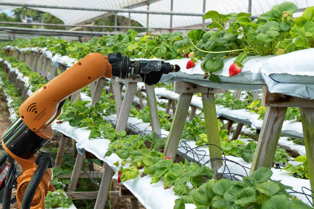 Los productos agrícolas españoles, una necesidad para la industria alimentaria del país